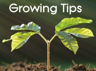 Growing Tips from Pretty Wild Seeds