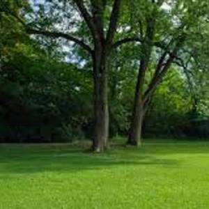 Shade Shady Area Lawn Grass Seed (Under Trees etc)