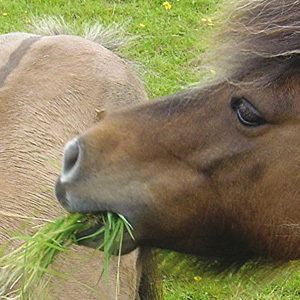 Horse/Pony Stop Laminitics Grass & Herb Mix