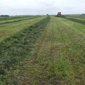Silage Mix Short Term