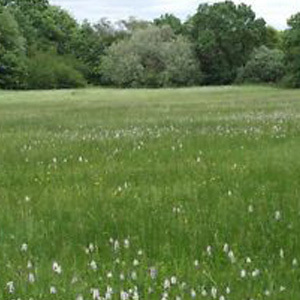 8 Species Meadow Grass Seed