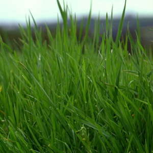 10 Species With Clover Meadow Grass Seed