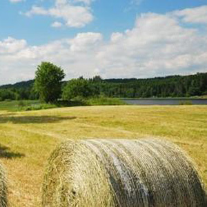 Hay & Haylage Seed Mix