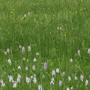 8 Species with Clover Meadow Grass Seed