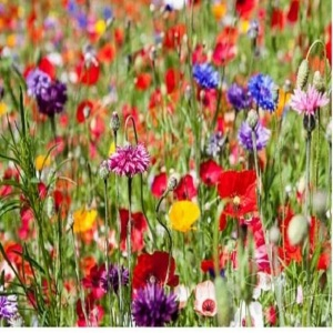 Mix 30 Pure Premium Wildflower Mix for Acidic & Clay Soils