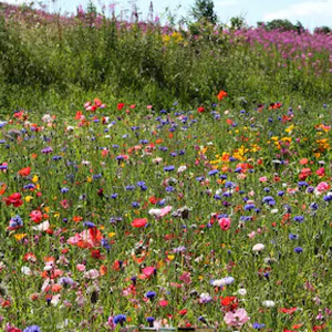 Mix 26A Pure Wildflower & Annuals Mix For Butterfly and Bee