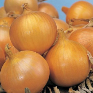 Onion 'Bedfordshire Champion' Seeds