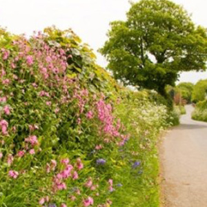 Mix 18 80/20 Hedgerow & Shady Area Wildflower Mix