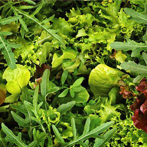 Lettuce Mixed Leaf 'Mesclun Mix' Seed