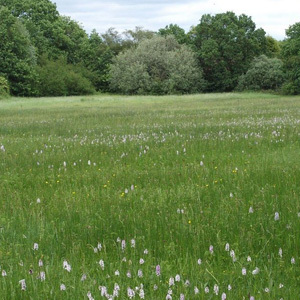 14 Species Pure Meadow Grass Seed Mix