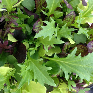 Lettuce Mixed Leaf 'Bright & Spicy' Seed