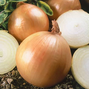 Onion 'Ailsa Craig' Seeds