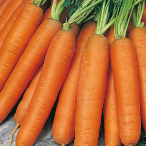 Carrot 'Early Nantes' Seeds Carrots
