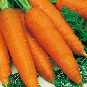 Carrot 'Autumn King 2' Seeds carrots