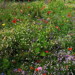 Mix 28A 80/20 Multi Soil Wildflower Meadow Mix