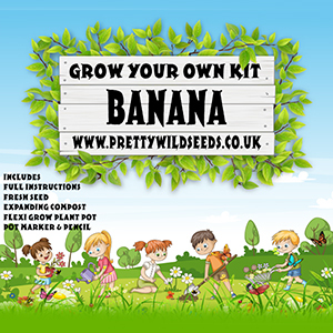 Kids Grow Your Own Banana Kit