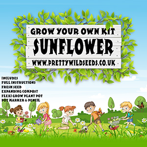 Kids Grow Your Own Sunflower Kit