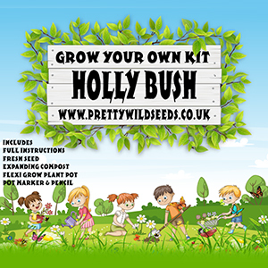Kids Grow Your Own Holly Bush Kit