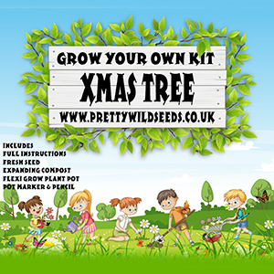 Kids Grow Your Own Xmas Tree Kit