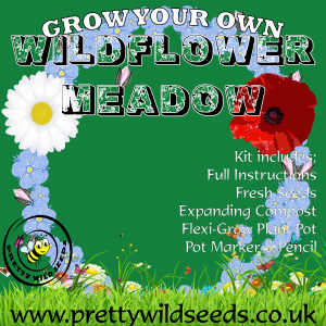 Kids Grow Your Own Wildflower Meadow Kit