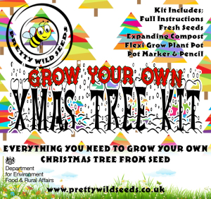 Grow Your Own Xmas Tree Kit