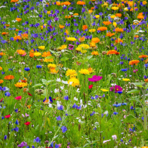 Mix 149 Pure Wildflower Meadow Wild & Scented