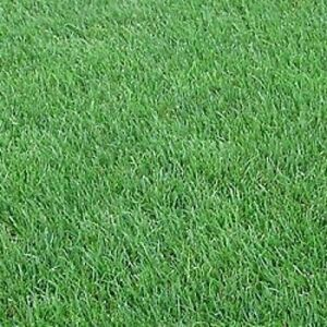 New Orleans Super Lawn Grass Seed