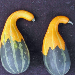 Spoon Gourd Cucurbita Pepo Small Spoon Seeds