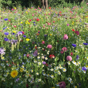 Mix 150 70/30 Wildflower Meadow for Embankment & Slopes