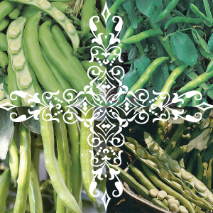 Broad Beans Seeds 4 Pack; Sutton Dwarf, Aquadulce Claudia, Masterpiece & Bunyard's Exhibition Broad Bean