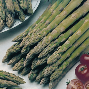 Asparagus Connovers Colossal Asparagus Officinalis Seeds